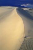 沙丘豆科灌木沙子 图库摄影