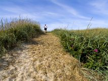 沙丘象草在沙子跟踪 免版税库存照片