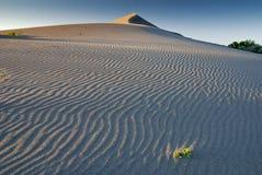 沙丘起波纹的沙子日落 库存照片