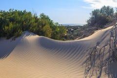 沙丘阴影 库存图片