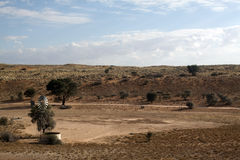 沙丘kalahari红色风车 库存照片