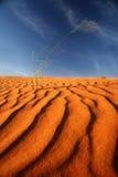 沙丘kalahari纳米比亚红色沙子 免版税库存照片