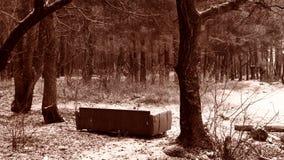 沙发在森林里 免版税库存照片