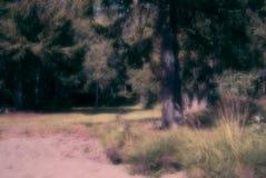 沙子一处梦想,平安的海滩前的夏天风景,草、秸杆、杉树和一个森林在背景中,与 图库摄影