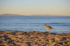 沙子吹笛者鸟海滩 库存图片
