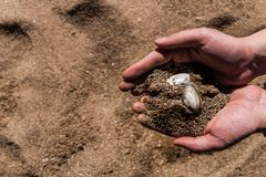 沙子和壳在科学家手上 库存图片