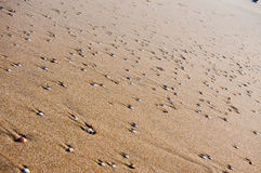 沙子和壳纹理 库存照片