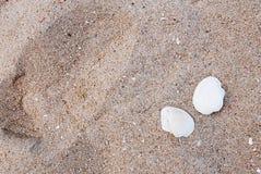 沙子和壳 免版税库存图片