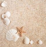 沙子和壳 图库摄影