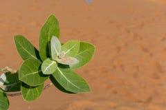 沙子和太阳的沙漠绿色植物 免版税库存照片