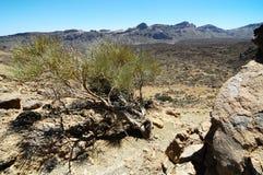 沙子和岩石沙漠 免版税库存照片
