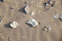 沙子和石头在海滩 免版税图库摄影