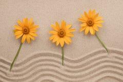 沙子和花,春黄菊美好的之字形在沙子增长 库存图片