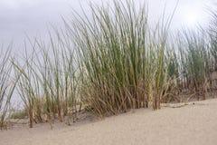 沙子和草在沙丘 图库摄影