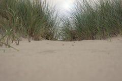沙子和草在沙丘 免版税库存照片