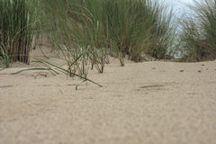 沙子和草在沙丘 库存图片