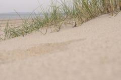 沙子和草在沙丘 库存照片