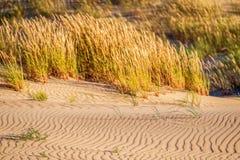 沙子和草 库存图片