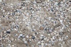 沙子和贝壳墙纸 免版税库存图片