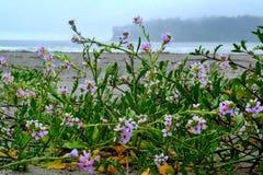 沙子在海滩的Verbanas花 免版税库存照片