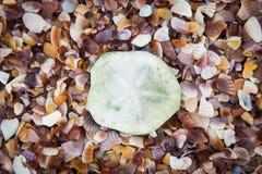 沙子壳。 库存图片