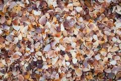 沙子壳。 免版税库存图片