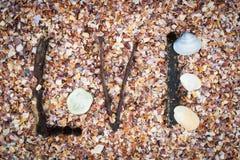 沙子壳。 免版税图库摄影