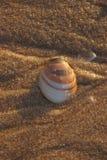 沙子壳 免版税图库摄影