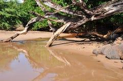 沙子岸河 库存图片