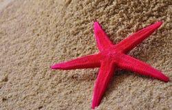 沙子星形 免版税图库摄影