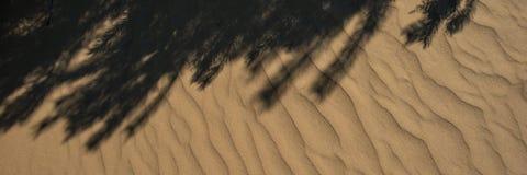 沙子植物表面和树荫  万维网横幅 图库摄影