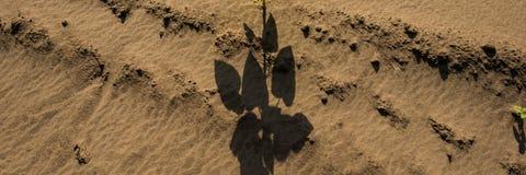 沙子植物表面和树荫  万维网横幅 免版税库存图片