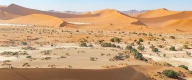 沙子沙丘全景在Sossusvlei自然保护的在纳米比亚 在主要` vlei `平底锅的这些带红色沙丘是巨型的 免版税库存图片