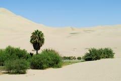 沙子沙漠沙丘和绿色绿洲 免版税图库摄影