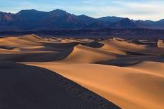 沙子波浪在沙丘顶部的 日出 豆科灌木的F沙漠 库存照片