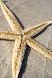 沙子海星 免版税图库摄影