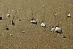 沙子海滩的壳海 免版税库存照片