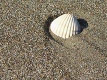沙子海运壳 背景球海滩美好的空的夏天排球 顶视图 免版税库存照片