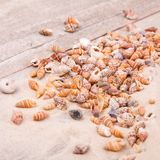 沙子海运壳 背景球海滩美好的空的夏天排球 免版税库存照片