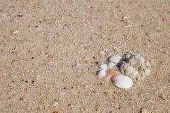 沙子海运壳 背景球海滩美好的空的夏天排球 库存照片