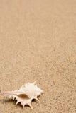 沙子海运壳 背景球海滩美好的空的夏天排球 图库摄影