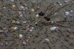 沙子海滩背景 免版税库存照片