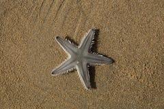 沙子的星 图库摄影