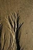 沙子的树 免版税库存照片