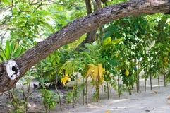 沙子的热带庭院 免版税库存图片