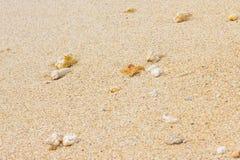 沙子纹理与粗砺的珊瑚石头的 免版税库存图片