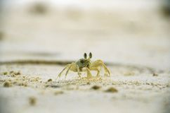 沙子螃蟹 库存图片