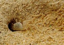 沙子螃蟹 库存照片