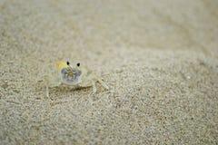 沙子螃蟹 免版税图库摄影