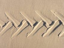 沙子轮胎踩 图库摄影